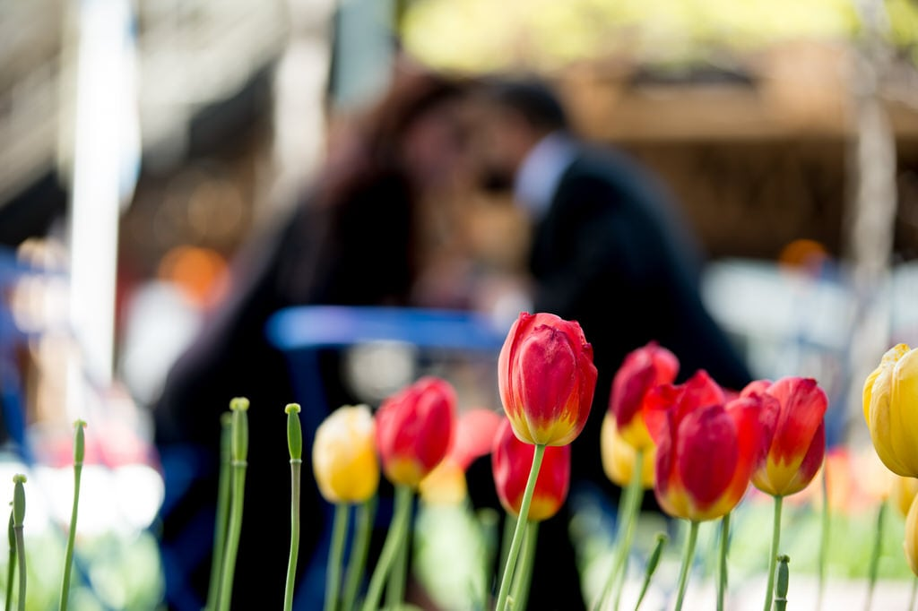 These vibrant tulips help to enhance and portray the couple's love as they celebrate the idea of moving forward and spending the rest of their life together. The red and yellow in the flowers emulate the bright and burning passion that goes into loving someone so much.