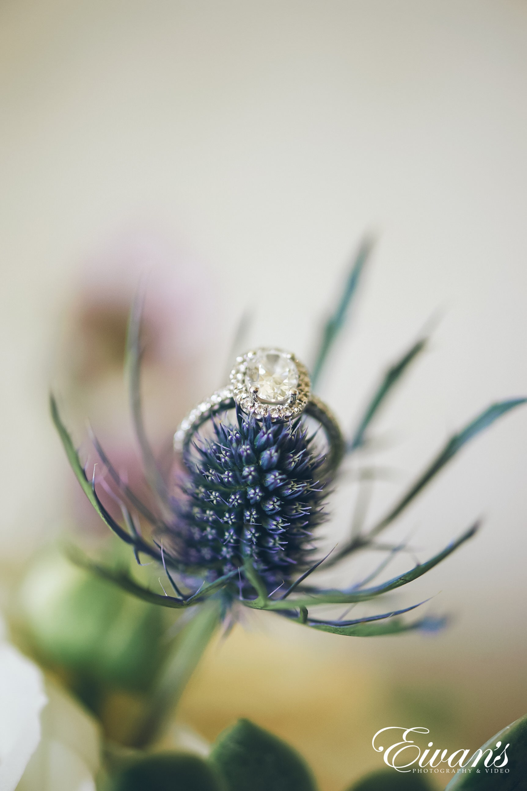 close up shot of flower with a diamond ring on it
