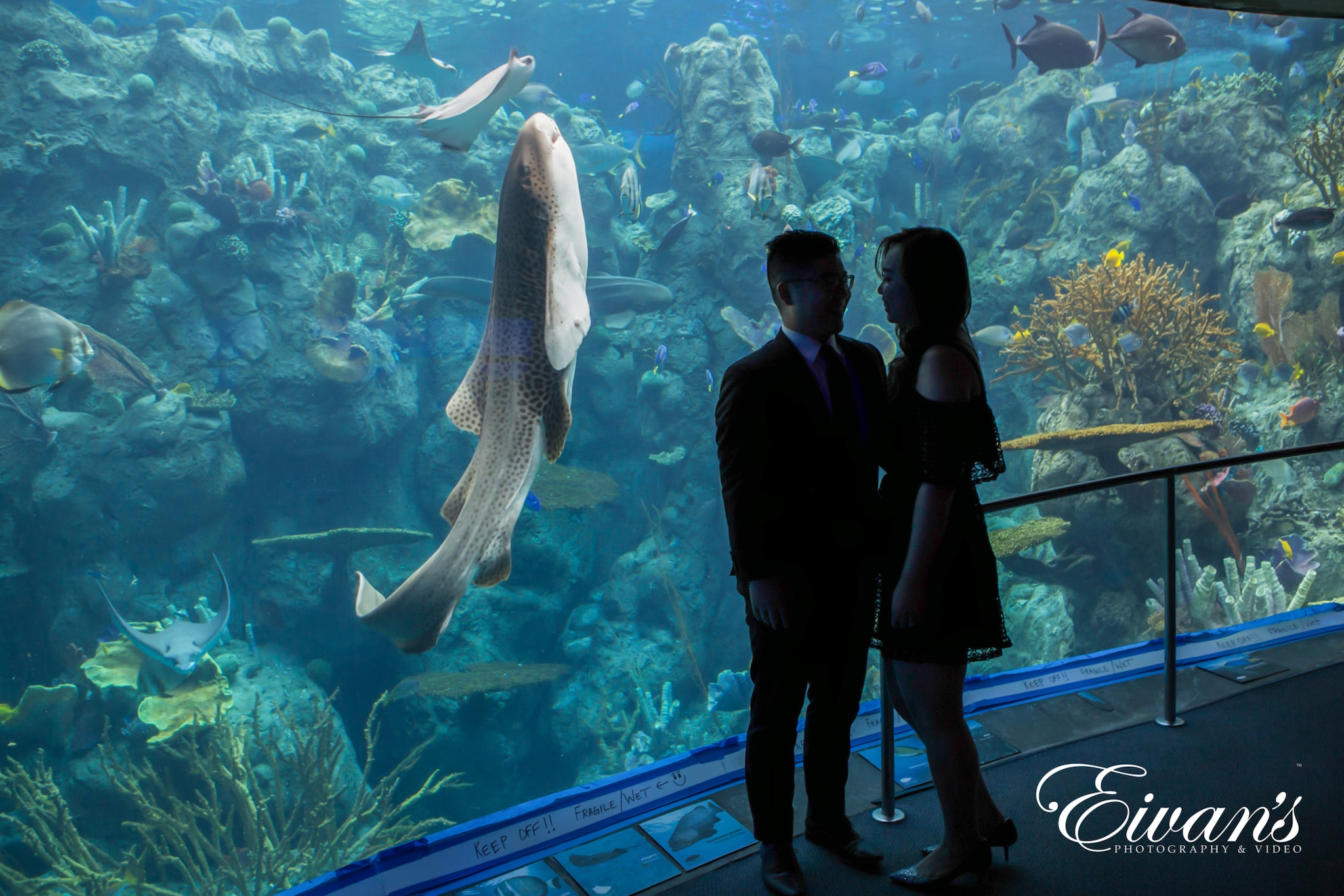 image of a married couple in the aquarium